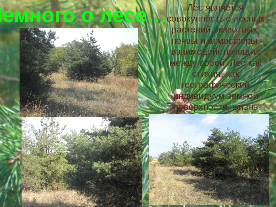 Лес является совокупностью лесных растений, животных, почвы и атмосферы, взаи...