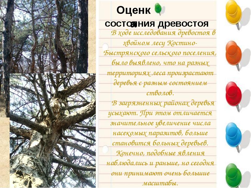 Оценка В ходе исследования древостоя в хвойном лесу Костино-Быстрянского сель...