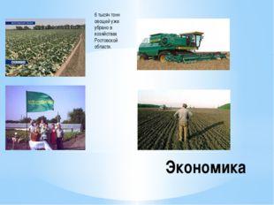 6 тысяч тонн овощей уже убрано в хозяйствах Ростовской области. Экономика