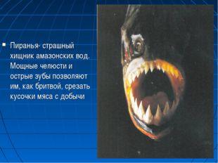 Пиранья- страшный хищник амазонских вод. Мощные челюсти и острые зубы позволя
