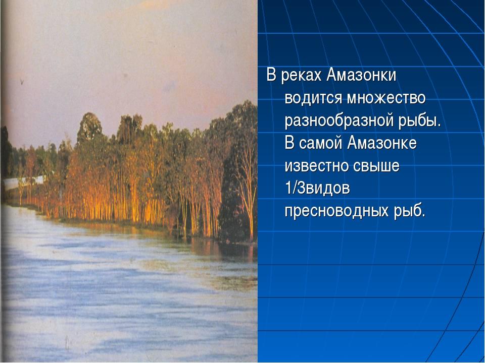 В реках Амазонки водится множество разнообразной рыбы. В самой Амазонке извес...