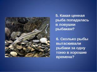 5. Какая ценная рыба попадалась в ловушки рыбакам? 6. Сколько рыбы вытаскивал