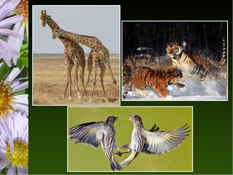 картинки взаимоотношение в природе засохший пень, украшенный