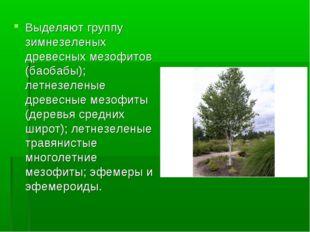 Выделяют группу зимнезеленых древесных мезофитов (баобабы); летнезеленые древ