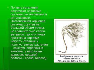 По типу ветвления различают корневые системы экстенсивные и интенсивные. Экст