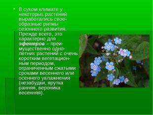 В сухом климате у некоторых растений выработались свое-образные ритмы сезонно