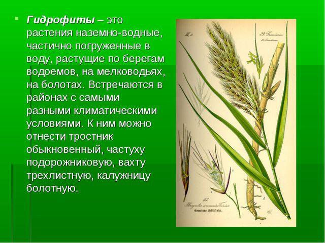 Гидрофиты – это растения наземно-водные, частично погруженные в воду, растущи...