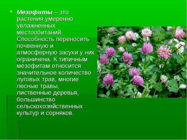 Мезофиты – это растения умеренно увлажненных местообитаний. Способность перен...