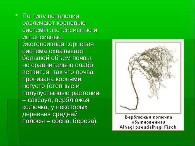 По типу ветвления различают корневые системы экстенсивные и интенсивные. Экст...