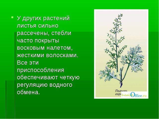 У других растений листья сильно рассечены, стебли часто покрыты восковым нале...