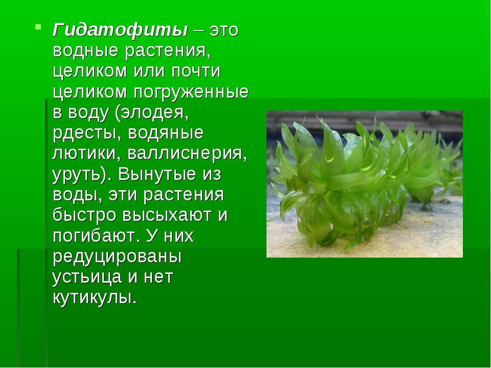 Гидатофиты – это водные растения, целиком или почти целиком погруженные в вод...
