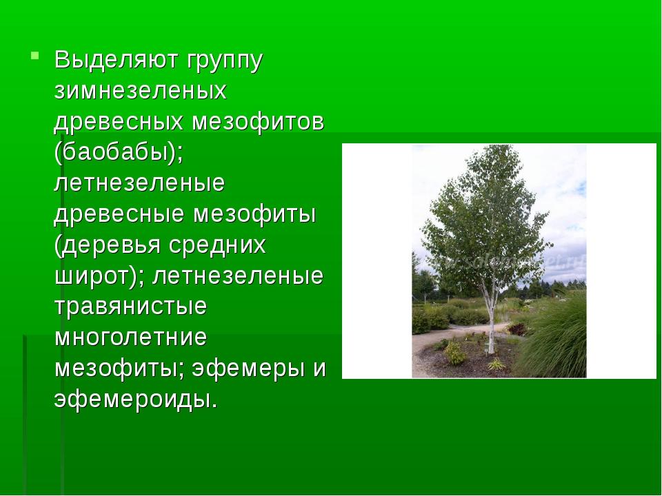 Выделяют группу зимнезеленых древесных мезофитов (баобабы); летнезеленые древ...