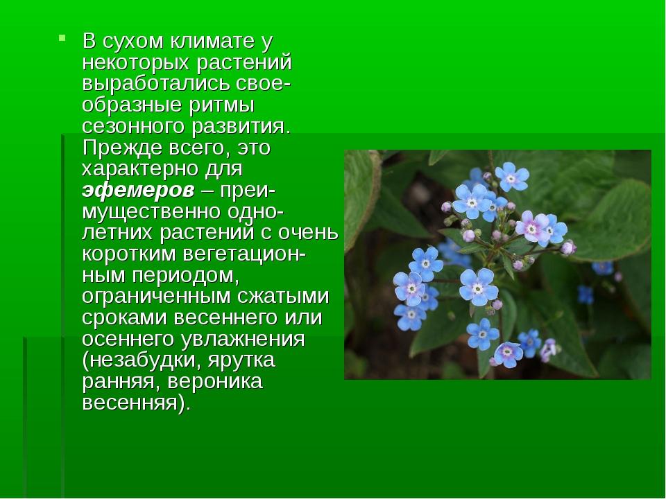 В сухом климате у некоторых растений выработались свое-образные ритмы сезонно...