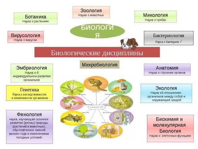 Биологические дисциплины БИОЛОГИЯ Генетика Наука о наследственности и изменчи...