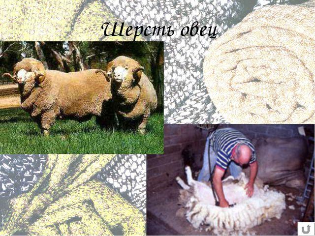 Шерсть овец