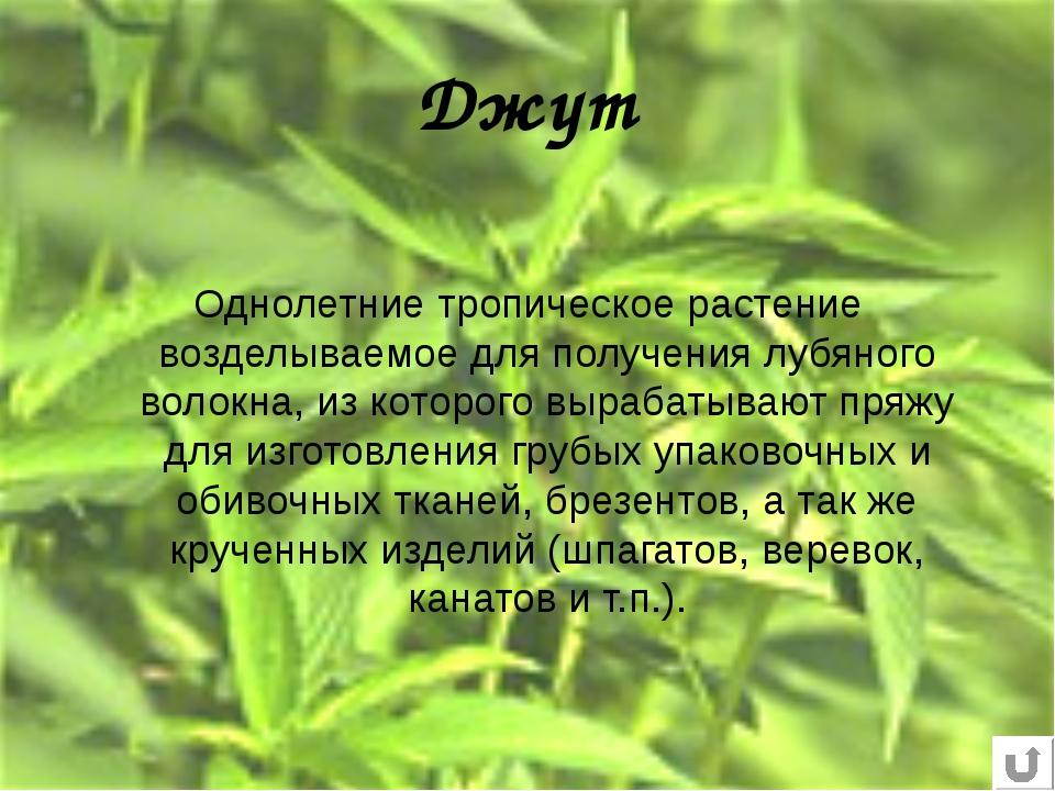 Джут Однолетние тропическое растение возделываемое для получения лубяного вол...