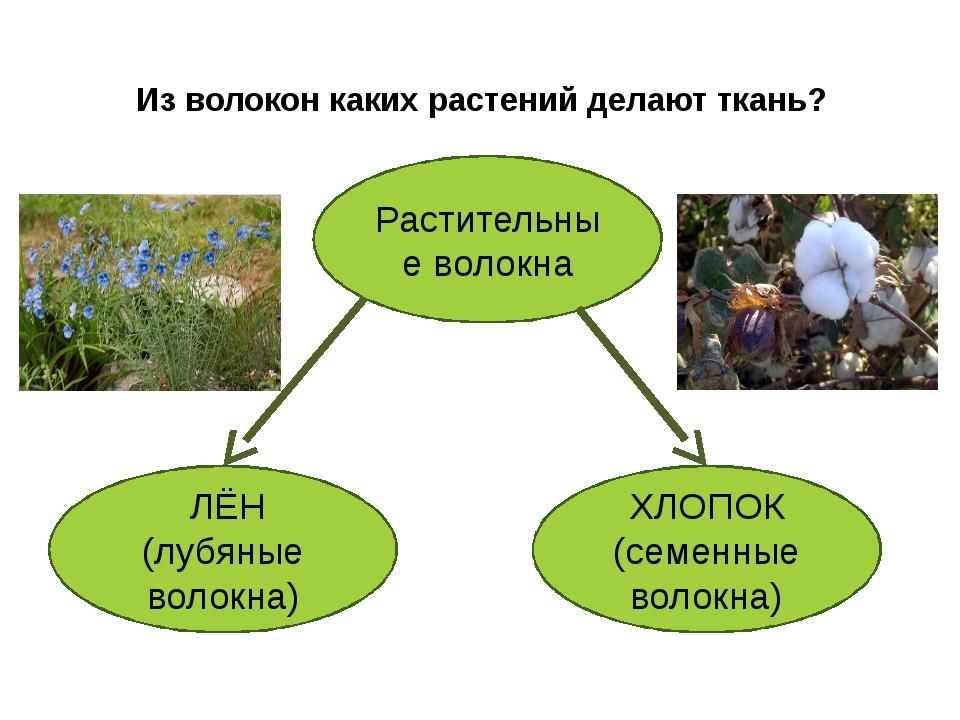 Из волокон каких растений делают ткань? Растительные волокна ЛЁН (лубяные вол...