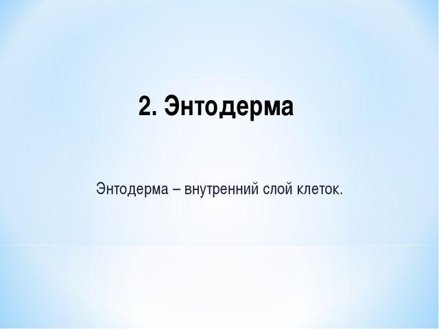 2. Энтодерма Энтодерма – внутренний слой клеток.