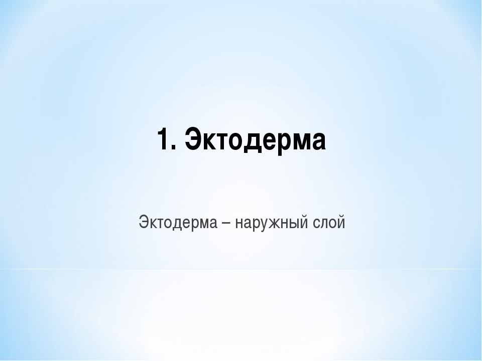 1. Эктодерма Эктодерма – наружный слой