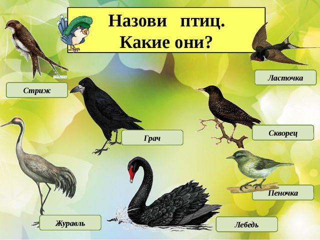Назови птиц. Какие они? Стриж Грач Ласточка Журавль Лебедь Скворец Пеночка