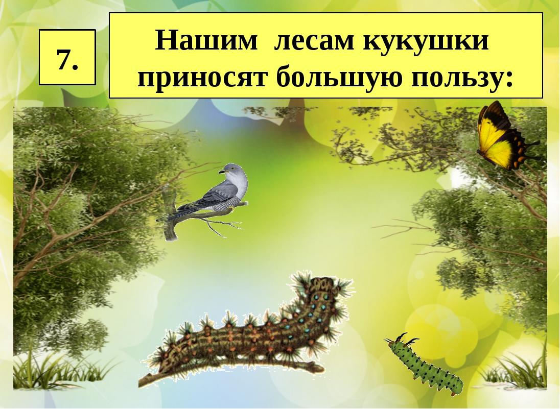 7. Нашим лесам кукушки приносят большую пользу: