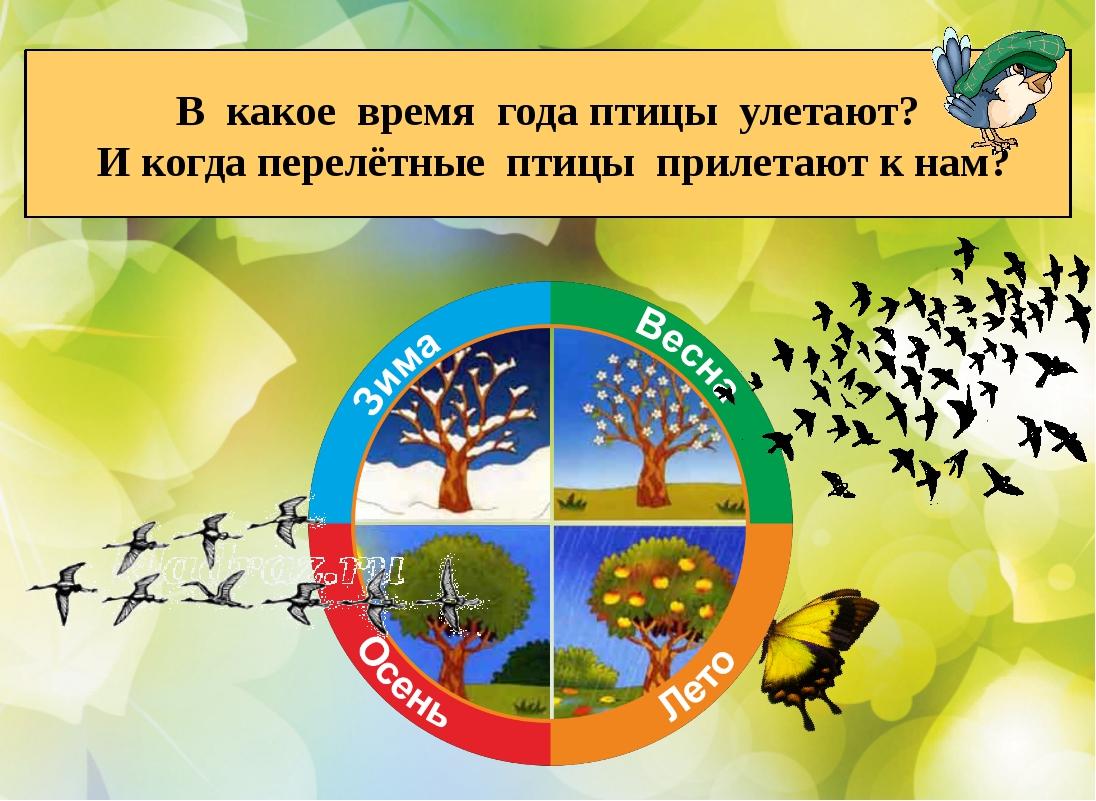В какое время года птицы улетают? И когда перелётные птицы прилетают к нам?