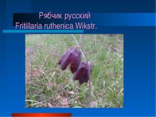 Рябчик русский Fritillaria ruthenica Wikstr.