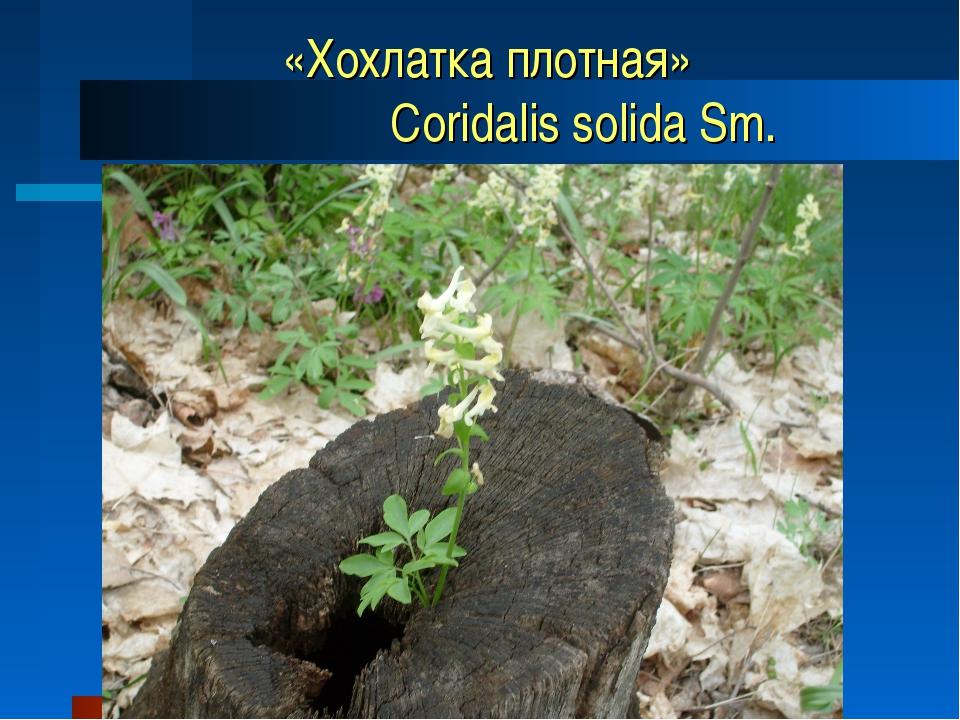 «Хохлатка плотная» Coridalis solida Sm.