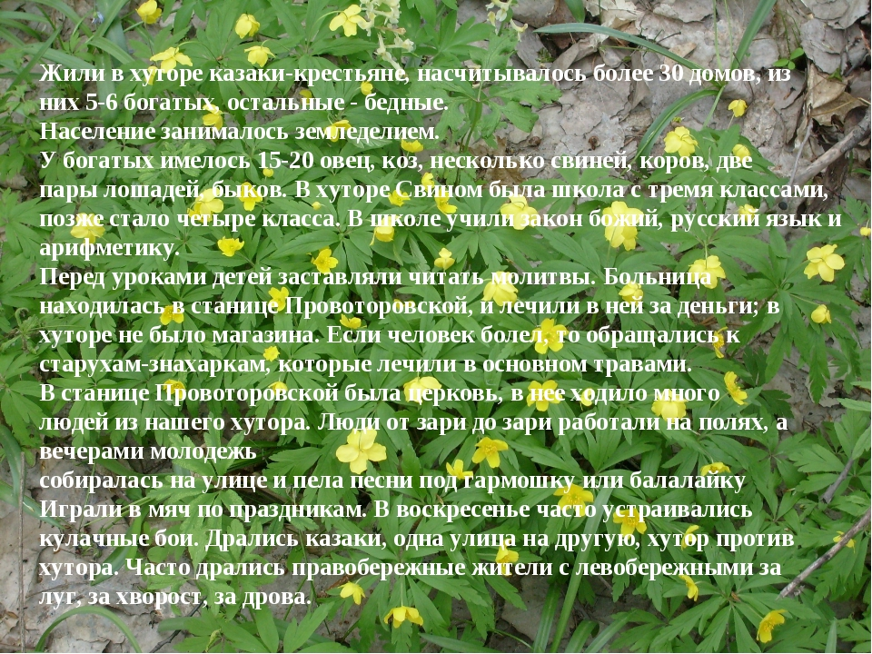 Жили в хуторе казаки-крестьяне, насчитывалось более 30 домов, из них 5-6 бога...
