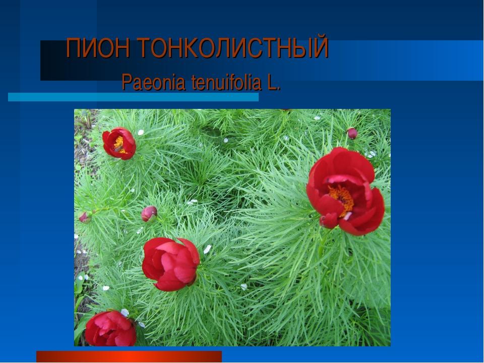 ПИОН ТОНКОЛИСТНЫЙ Paeonia tenuifolia L.