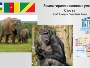 Земля горилл и слонов в регионе Сангха (ЦАР, Камерун, Республика Конго) 2012