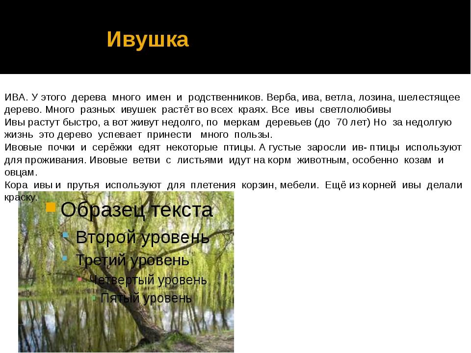 Ивушка ИВА. У этого дерева много имен и родственников. Верба, ива, ветла, ло...