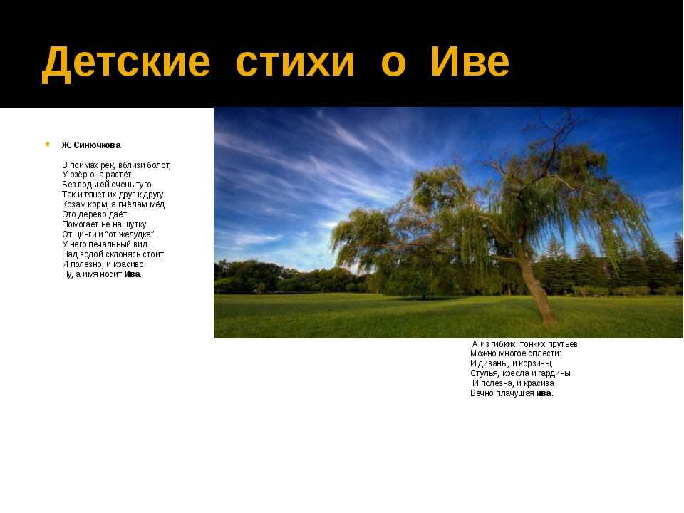 Детские стихи о Иве Ж. Синючкова В поймах рек, вблизи болот, У озёр она растё...