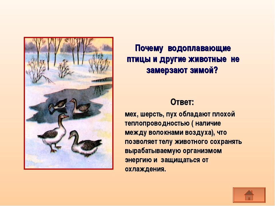 Почему водоплавающие птицы и другие животные не замерзают зимой? мех, шерсть,...