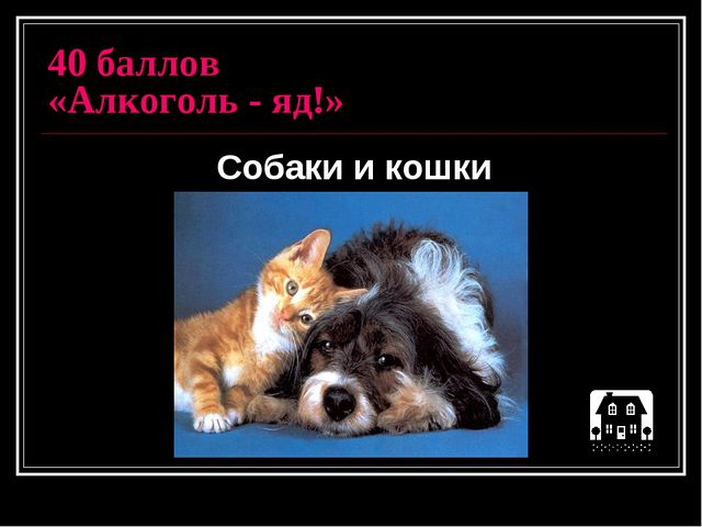 40 баллов «Алкоголь - яд!» Собаки и кошки