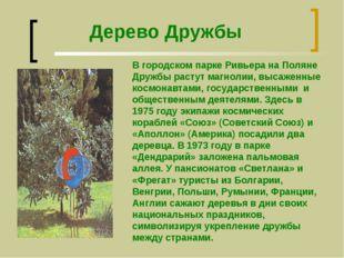 Дерево Дружбы В городском парке Ривьера на Поляне Дружбы растут магнолии, выс