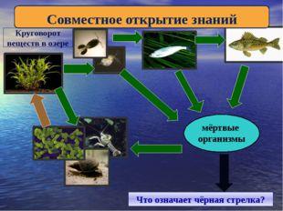 мёртвые организмы Что означает чёрная стрелка? Совместное открытие знаний Кр