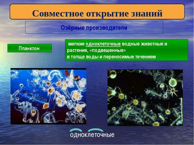 Озёрные производители Планктон мелкие одноклеточные водные животные и растени...