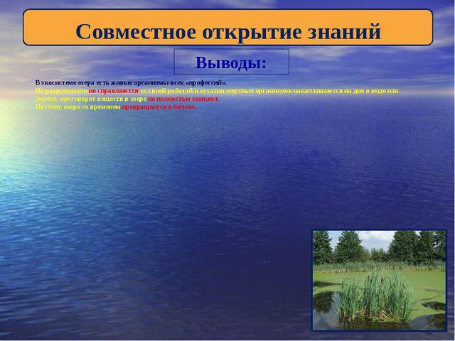 Выводы: В экосистеме озера есть живые организмы всех «профессий». Но разрушит...
