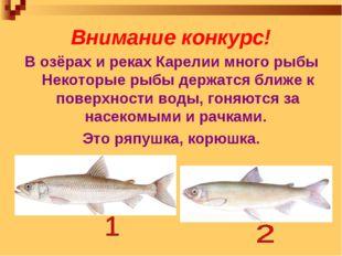 Внимание конкурс! В озёрах и реках Карелии много рыбы Некоторые рыбы держатся