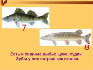 Есть и хищные рыбы: щука, судак. Зубы у них острые как иголки.