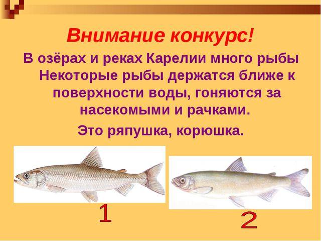 Внимание конкурс! В озёрах и реках Карелии много рыбы Некоторые рыбы держатся...
