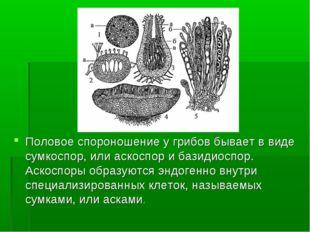 Половое спороношение у грибов бывает в виде сумкоспор, или аскоспор и базидио