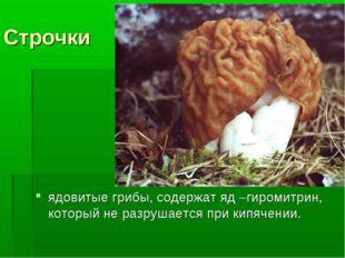 Строчки ядовитые грибы, содержат яд –гиромитрин, который не разрушается при к