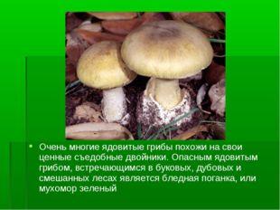 Очень многие ядовитые грибы похожи на свои ценные съедобные двойники. Опасным