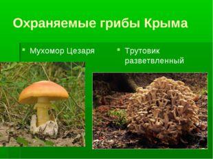 Охраняемые грибы Крыма Мухомор Цезаря Трутовик разветвленный