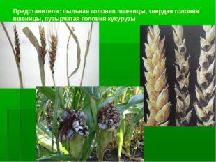 Представители: пыльная головня пшеницы, твердая головня пшеницы, пузырчатая г