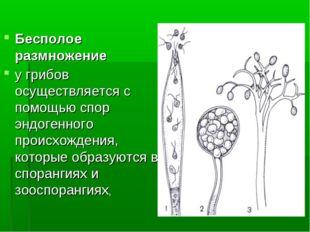Бесполое размножение у грибов осуществляется с помощью спор эндогенного проис