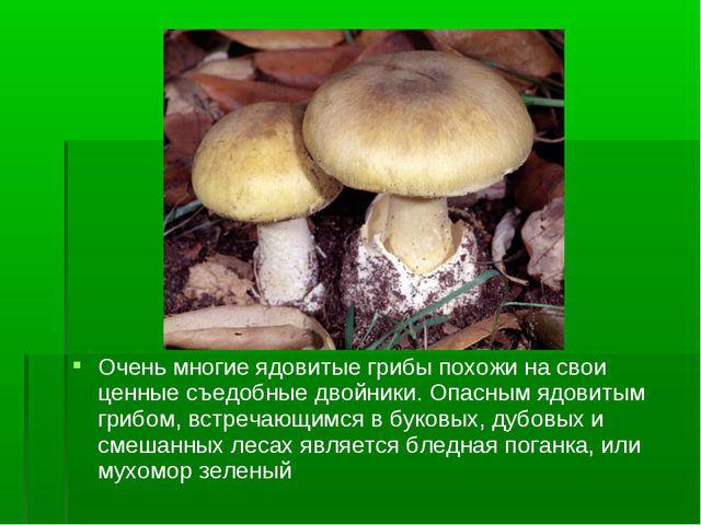 Очень многие ядовитые грибы похожи на свои ценные съедобные двойники. Опасным...