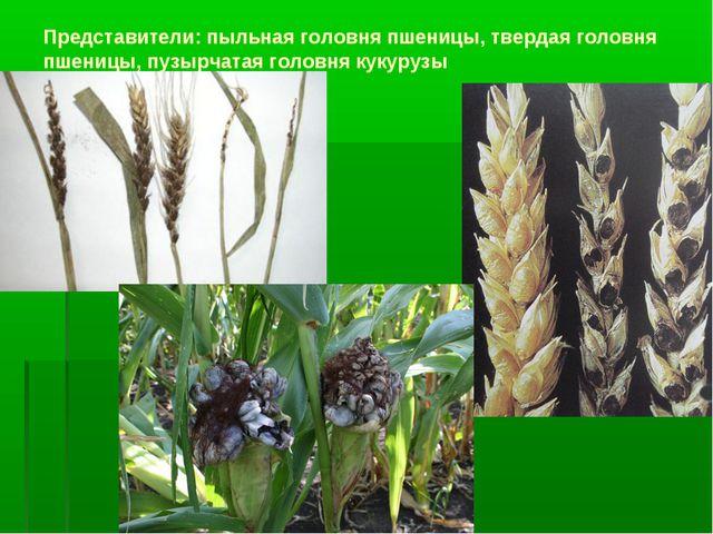 Представители: пыльная головня пшеницы, твердая головня пшеницы, пузырчатая г...